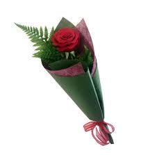 Single gift wrapped rose